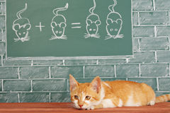 Scientific Cat. Education idea about foxy Cat studied mathematics on example of addition of mice Stock Image