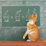 Scientific Cat. Education idea about foxy Cat studied mathematics on example of addition of mice Stock Photo