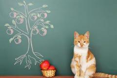 Scientific Cat Royalty Free Stock Photos