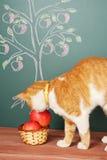 Scientific Cat Stock Images