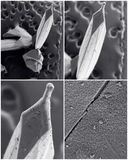 Scientific collage. Photo from electron microscope Royalty Free Stock Images