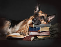 Scientific dog Royalty Free Stock Images