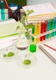 Scientific experiment Stock Photos