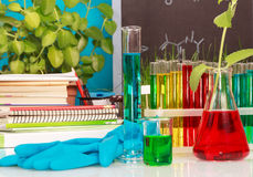 Scientific experiment. The scientific experiment, workplace in a laboratory Royalty Free Stock Photo