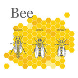 Scientific image of bees on the background of honeycombs. Queen, drone, worker bees are on Honeycomb background. Infographics elements Stock Image