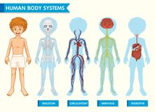 Free Scientific Medical Illustration Of Human Body Systems Royalty Free Stock Image - 154711196