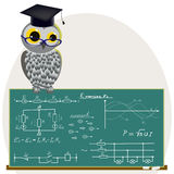 Scientific owl. Stock Image