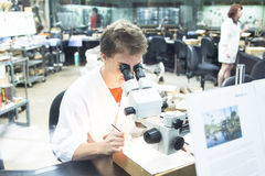 Scientific Research Royalty Free Stock Images