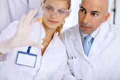 Scientific research team with clear solution in laboratory Royalty Free Stock Photo