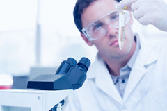 Scientific researcher looking at test tube while using microscope in lab Royalty Free Stock Photos