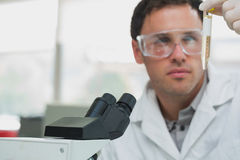 Scientific researcher looking at test tube while using microscope in lab Stock Images