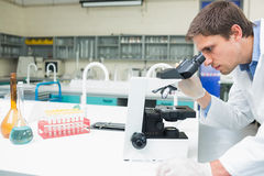 Scientific researcher using microscope in the laboratory. Side view of a male scientific researcher using microscope in the laboratory Stock Images