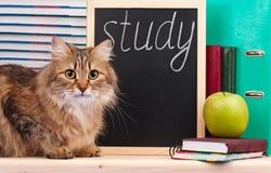 Scientific siberian cat Royalty Free Stock Photos