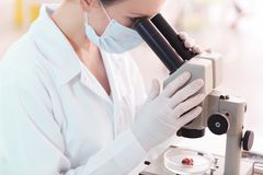 Scientifique à l'aide du microscope pour l'échantillon de examen de viande dans le laboratoire images libres de droits