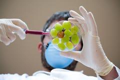 Scientifique créant des raisins de GMO photographie stock libre de droits