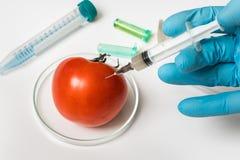 Scientifique de GMO injectant le liquide de la seringue dans la tomate rouge image libre de droits