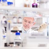 Scientifique de vie recherchant dans le laboratoire Photographie stock