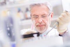 Scientifique de vie recherchant dans le laboratoire Photo libre de droits
