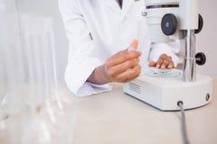 Scientifique examinant la boîte de Pétri sous le microscope Image libre de droits