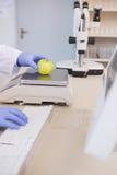 Scientifique pesant la pomme images stock