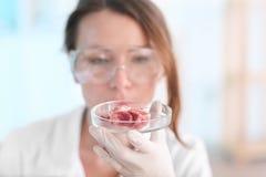Scientifique tenant la boîte de Pétri avec l'échantillon de viande dans le laboratoire photos stock