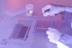 Scientifique travaillant dans le laboratoire Photo libre de droits