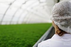 Scientifiques agricoles juniors recherchant des usines Photographie stock libre de droits