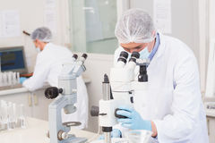 Scientifiques travaillant attentivement avec des microscopes photos stock