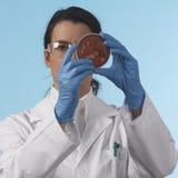 Scientis mit Petri-Platte Stockfotografie