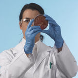 Scientis with petri plate. Lab worker with coat Stock Photography
