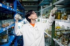Scientist. At work in lab royalty free stock photography