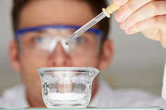 Scientist Adding Liquid To Glass Dish From Dropper Royalty Free Stock Images