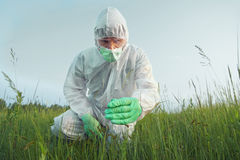 Scientist agronomist examines green plant Royalty Free Stock Photo