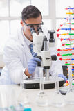 Scientist analysing petri dish with the microscope Royalty Free Stock Photography