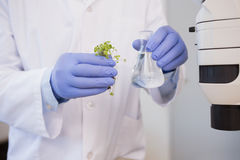 Scientist analysing plant Stock Image