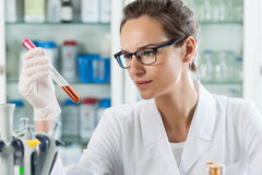 Scientist analyzing chemical liquid Royalty Free Stock Photography
