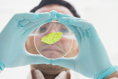 Scientist analyzing a leaf at the laboratory. Close up low angle view of a scientist analyzing a leaf at the laboratory Stock Images