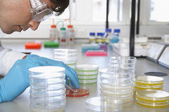 Scientist Analyzing Petri Dish Royalty Free Stock Photo