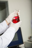 Scientist Analyzing Red Liquid In Flask Stock Photography