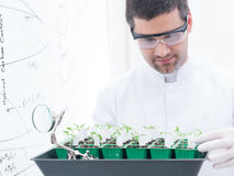 Scientist analyzing seedlings Royalty Free Stock Images