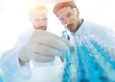 Scientist and assistant studying the solution in the tube. Closeup. scientist and assistant studying the solution in the tube Stock Image