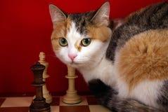 Scientist cat Stock Photography