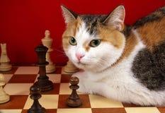 Scientist cat Stock Image