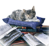 Scientist cat and scratched school books funny isolate composition Stock Photos