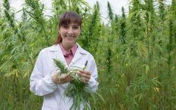 Scientist checking hemp flowers Stock Photos