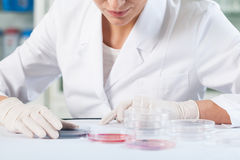 Scientist checking Petri dishes Royalty Free Stock Photography