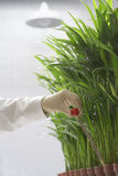 Scientist Conducting Test On Plants Stock Photo