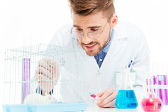 Scientist doing experiments with rat. Male scientist doing experiments with rat in a laboratory Royalty Free Stock Photo
