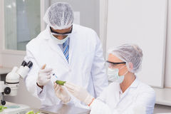 Scientist doing injecting a courgette Royalty Free Stock Images