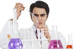 Scientist doing scientific experiment in a laboratory Royalty Free Stock Image